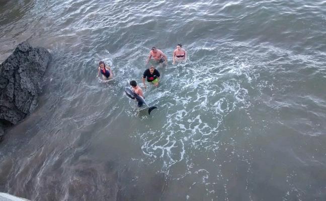 Bañistas de Candás se unen para salvar sin éxito a un delfín varado