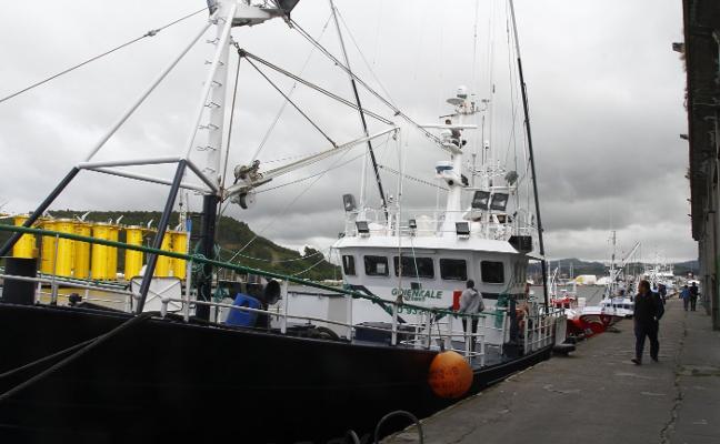 El precio medio del bonito en la segunda subasta de la costera desciende a 7,22 euros