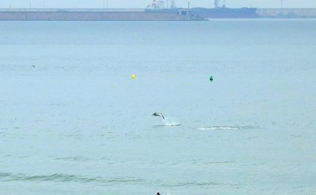 Surf y delfines en San Lorenzo