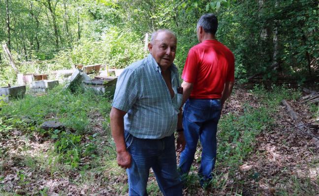 El oso destroza diez colmenas en el pueblo de Armá, en Lena