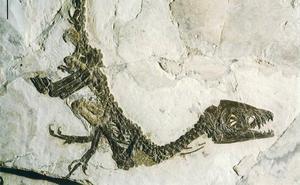 El Tiranosaurus Rex no podía sacar la lengua