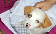 Rescatan a una perra de dos meses en Oviedo