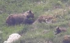 Somiedo, donde los osos se dejan ver