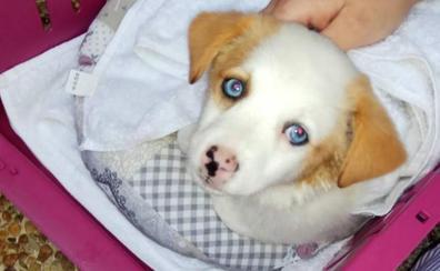 Abandonan en un transportín a una perra de dos meses en Las Mazas