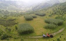 El compost de los brotes verdes