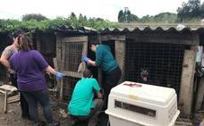 Desalojan una perrera en el barrio de La Luz, en Avilés
