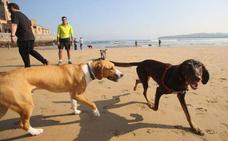 ¿Tienes perro? Estas son las playas de Asturias a las que lo puedes llevar