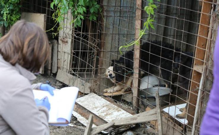 Desalojan una perrera en Avilés