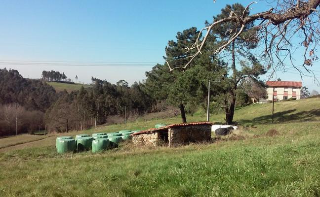 Tamón se opondrá que la perrera comarcal se construya en su parroquia