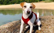 'Pipper', el perro turista, de paseo por Asturias