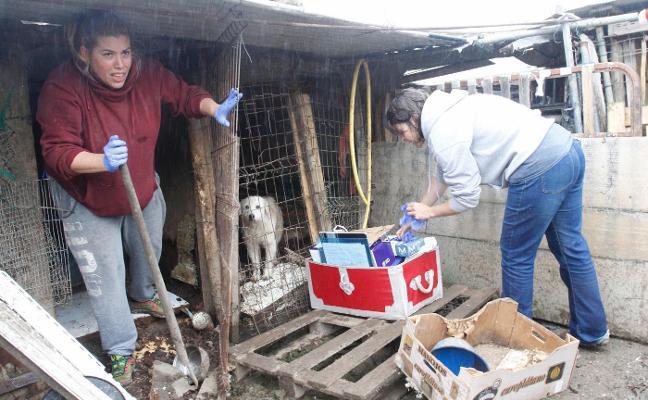 Las protectoras ya han reubicado a 44 perros y el gato de la perrera de La Luz