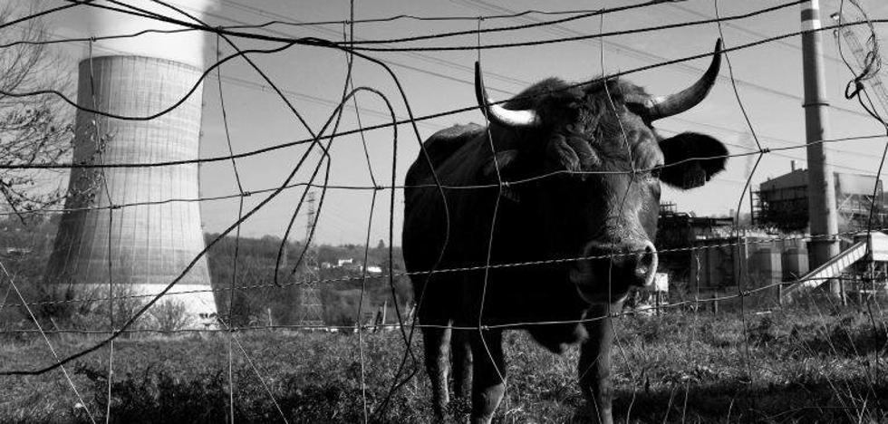 Asturias necesita alternativas, no misericordia