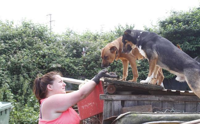 Las protectoras ya han realojado a 57 canes de la perrera ilegal de La Luz