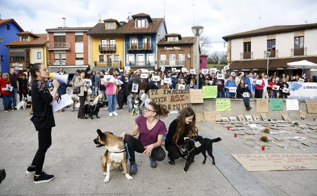 Un informe técnico avala adjudicar la recogida de animales en Siero a La Ería