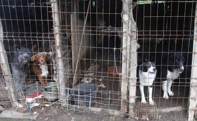 El Seprona señaló deficiencias en la perrera de La Luz hace ya más de un año