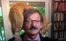 La cómica irrupción de un gato en una entrevista sobre tensión política en Polonia