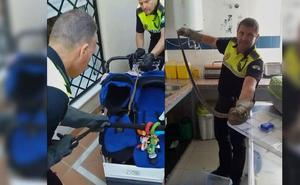 Descubren una culebra enroscada en el carrito de un bebé en Málaga