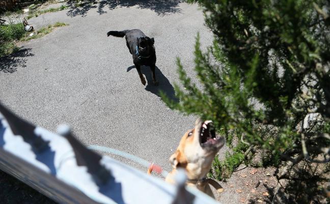 Fallece un hombre de 87 años tras ser atacado por los seis perros de un vecino en Siero