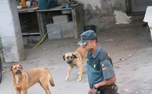 El Principado descarta el sacrificio de los perros que mataron a un hombre en Siero hasta completar el estudio veterinario