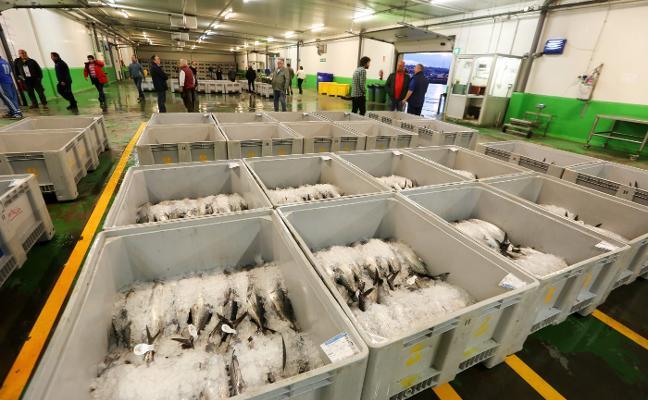 Los pescadores alertan de un posible agotamiento de la cuota de bonito