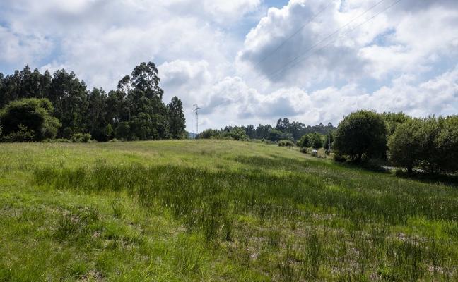 La planta eléctrica con biomasa prevé crear treinta empleos en Colunga