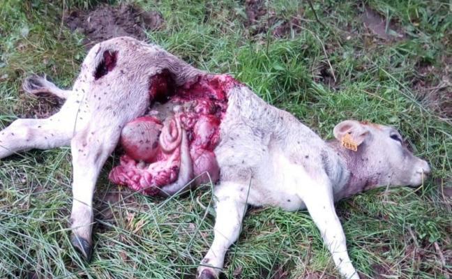 Foro Nava inicia una recogida de firmas para erradicar el lobo de las zonas pobladas