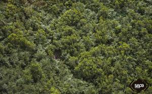 Rescatan a siete personas, entre ellas cinco menores, en Peñamellera Alta