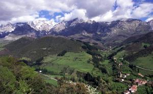 Aparece el cadáver de un oso pardo en el parque de Picos de Europa