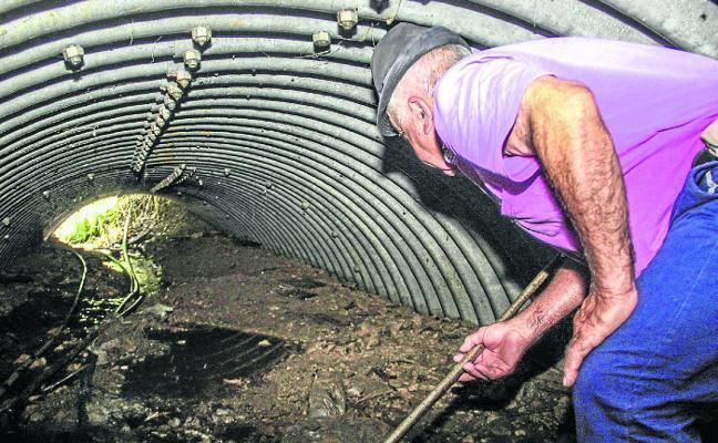 Encuentran el cadáver de un oso en la vertiente cántabra de los Picos