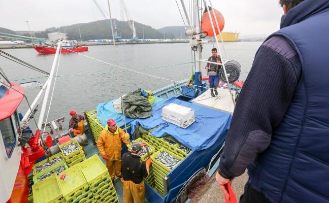 La rula aumenta la facturación pese a que desciende la cantidad de pescado subastado