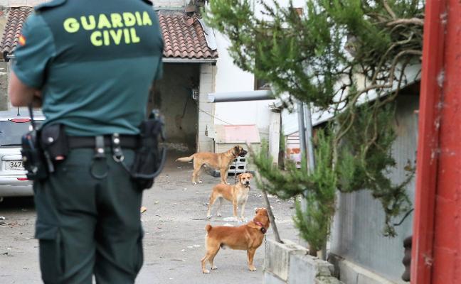 El Principado investiga al dueño de los cuatro perros que mataron a un vecino en Arniella
