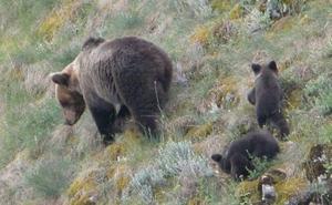 «Cuidado, puede haber un oso»