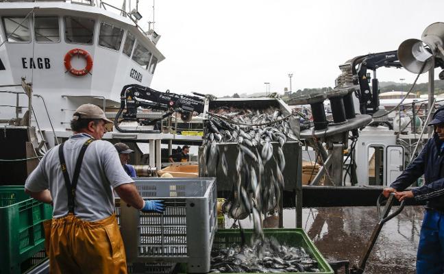 Los pescadores critican la descarga de chicharro en Gijón por un barco vasco