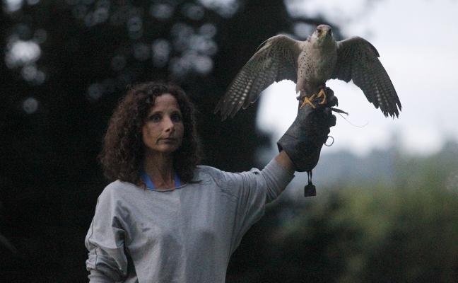 'Nocturnia' vuela en Gijón