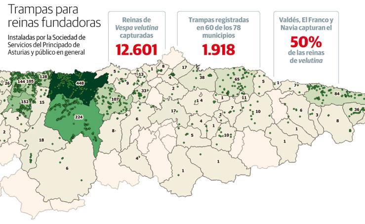 Trampas para reinas fundadoras en Asturias