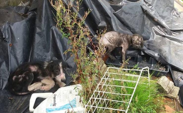Las impactantes imágenes del maltrato animal en una granja de Corvera