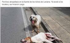 Denuncia el atropello y abandono de dos perros en Laviana