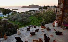 Un santuario felino busca cuidador para 55 gatos