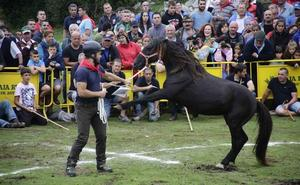 'Indomable' y 'Escurridizu' serán los asturcones a batir en Espineres