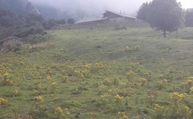 La Federación de Montaña propone una sextaferia para quitar la flor de Santiago