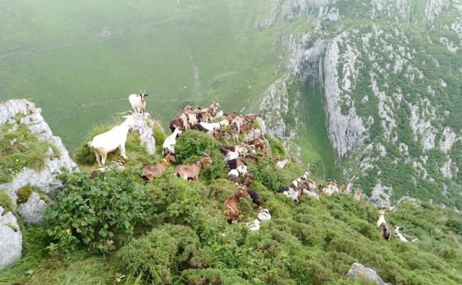 Los ganaderos del Oriente se unen ante el lobo y protestarán cortando la carretera de Arenas