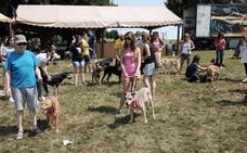 Desfile canino en busca de un hogar