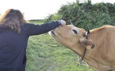 Lucía Etxebarría la lía en Twitter por una foto con un toro