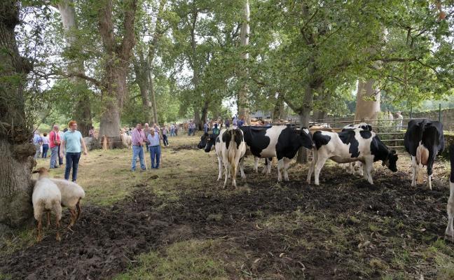 Caravia Alta reúne a más de 130 vacas y ovejas en la fiesta de La Consolación