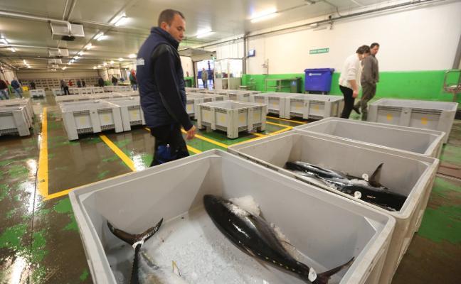 Las capturas de bonito crecen un 50% en la costera más corta