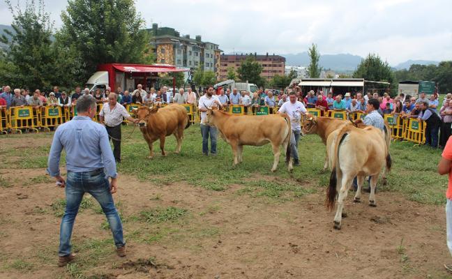 «Los nuevos ganaderos deberían recibir formación de la administración»