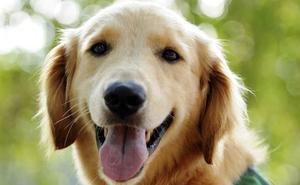 Un perro, elegido alcalde de un pueblo estadounidense