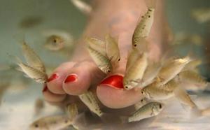 Pierde todos los dedos de un pie tras una pedicura con peces