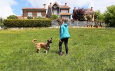 Oviedo dispondrá de seis nuevos parques caninos en meses