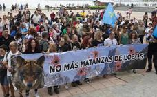 Los ecologistas, en contra de la caza indiscriminada del lobo